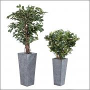 2 plantes