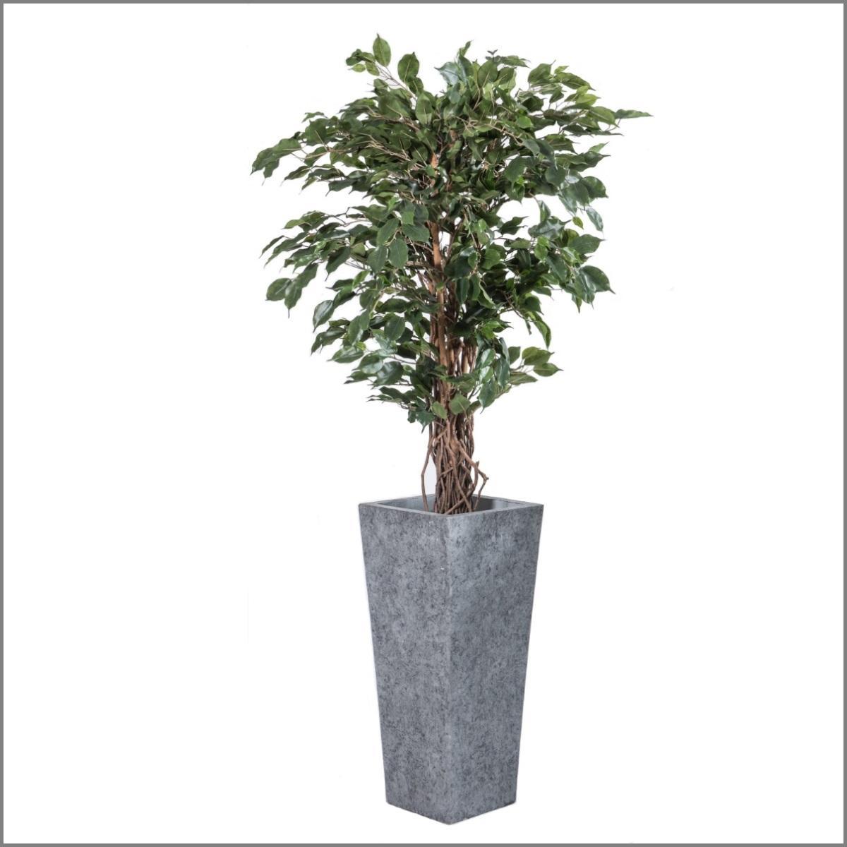 Plante ficus liane h190